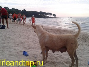 пляж Кози бич