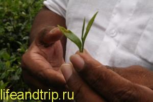 экскурсии на Шри-Ланке